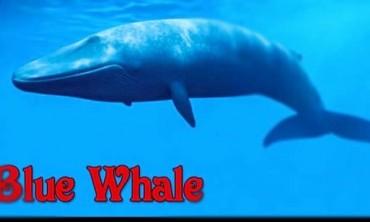 تحدي الحوت الأزرق.. لعبة الانتحار