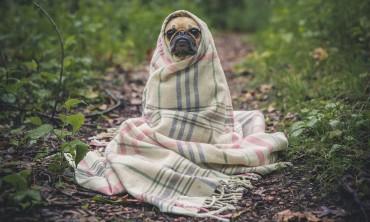 الحفاظ على الكلب من اصطياد الامراض