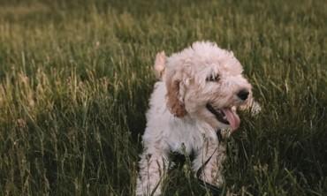 ما الذي يجعل الكلب المثالي