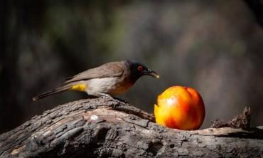 هل غذاء الطيور أهم عامل في رعاية الببغاء