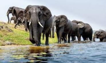 أهم 8 حقائق عن الفيلة