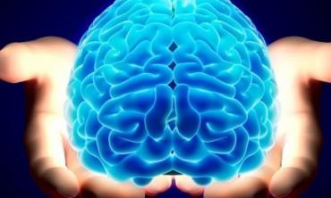 الأصول  5  الغامضة للدماغ البشري وكيفية التعرف عليها