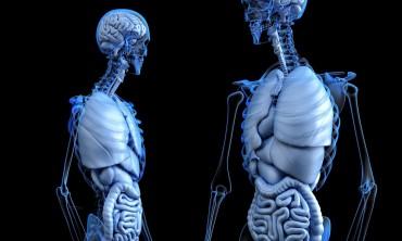 الالتواء في القولون سبب الامساك والعلاج الطبيعي