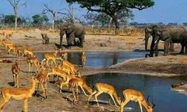 (محمية الدندر) المحميات الطبيعية التي يتنوع فيها الغطاء النباتي والمناخ والحياة البرية