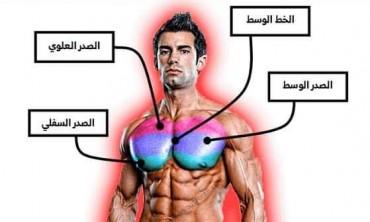 التشريح العضلي لعضله الصدر